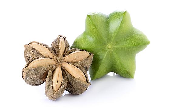 インカナッツ(サチャインチ)の種子/10粒(アマゾン発のスーパーフード!オメガ脂肪酸・必須アミノ酸を豊富に含み、世界で注目される星のカタチをしたスーパーナッツ)★送料無料