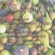 【送料無料】イチジクの苗木 久留米 くろみつ【果樹の苗 12cmポット苗  /1個売り】イチジク苗 イチジク苗木 イチジクの苗 無花果 果樹苗 果樹 果物 くだもの 栽培 ガーデニング 家庭菜園 鉢植え 庭植え