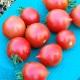 【送料無料・即出荷】テーブルトマト レッド ミニトマト苗【9cmポット自根苗/赤実2個セット】多収穫 人気 野菜苗 みにとまと苗 プチトマト苗  家庭菜園 ガーデニング ベランダ プランター 簡単栽培 mini tomato