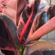 【送料無料】観葉植物 フィカス ベリーズ ゴムの木の仲間 中型【観葉植物 7号プラスチック鉢  /1個売り】観葉植物 リビング オフィス 事務所 インテリア 大型 おしゃれ オシャレ 育てやすい 御祝 お祝い 新築祝い プレゼント