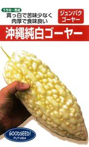 """野菜種子!""""純白ゴーヤー""""【10粒】種が大きいので簡単に蒔けます!(送料無料)"""