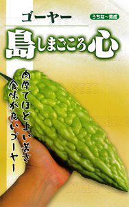 """野菜種子!黄緑色であまり苦くない""""島心ゴーヤー""""【10粒】種が大きいので簡単に蒔けます!(送料無料)"""