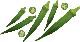 """野菜種子!超多収穫タイプでどんどんとれる""""丸莢F1オクラ 島の唄""""【10ml/約100粒】種が比較的大きいので簡単に蒔けます!(送料無料)"""