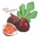 ミニイチジク ネルゴラルゴ【ミニ果樹苗9cmポット/2個セット即納】【送料無料】