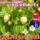 「ワイルドストロベリー白実」9cmポット苗【2個セット】【寒さに強く簡単に育つ野イチゴ 珍しい白実品種/ポット苗なので年中植付けOK!】【即出荷!送料込み価格】