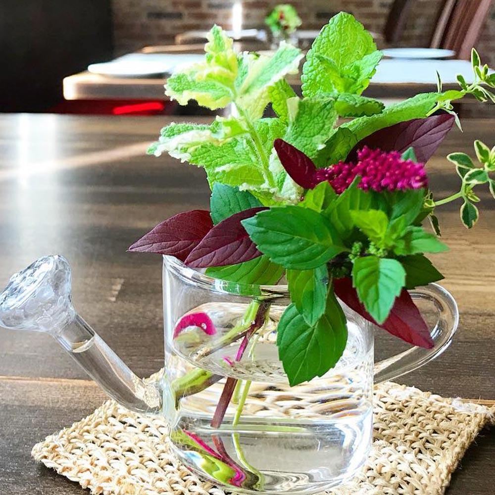 【送料無料】パイナップルミント 10.5cm 4個セット【おうちで簡単!育てやすい10.5cmポットハーブ苗シリーズ!】根張り・大きさ・選別が良いので、育てやすい!生育簡単で初心者にもオススメのハーブシリーズです!ガーデニングや家庭菜園に!