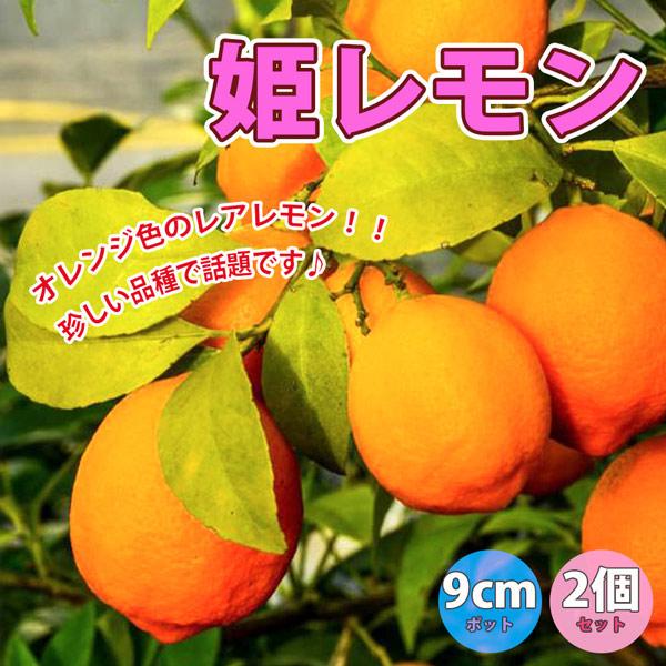 「姫レモン」【果樹挿し木苗9cmポット/2個セット】【ポット苗なので年中植付け可能!!即出荷!!送料込み価格!】