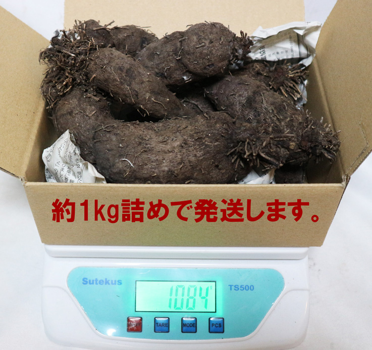【「紫山いも(大薯)」約1kg/アントシアニンたっぷり!芋の中まで濃い紫の希少品種即出荷/送料無料】