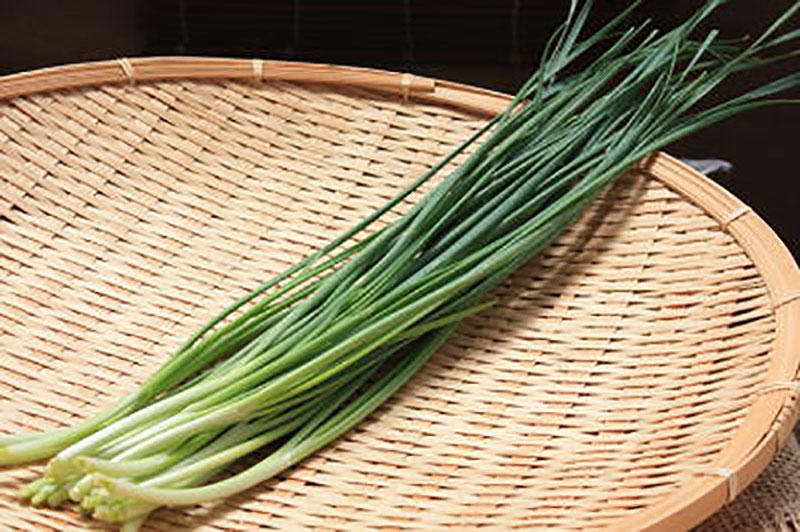 「ねぎにら(ネギニラ・なかみどり)」【野菜苗9cmポット 2個セット】【送料無料】