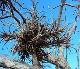 チランジア プルイノーサ グァテマラ-エアプランツ【幅約8cm 高さ約11cm(送料無料)】