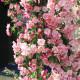 【送料無料】ヴァンエセルティン クラブアップル【庭木 5号接木苗  接木苗/1個売り】姫リンゴ ガーデニング 庭のある暮らし 花束 ひめりんご リンゴ リース フラワーアレンジメント crabapple ベランダ菜園 プランター菜園 収穫 有機栽培