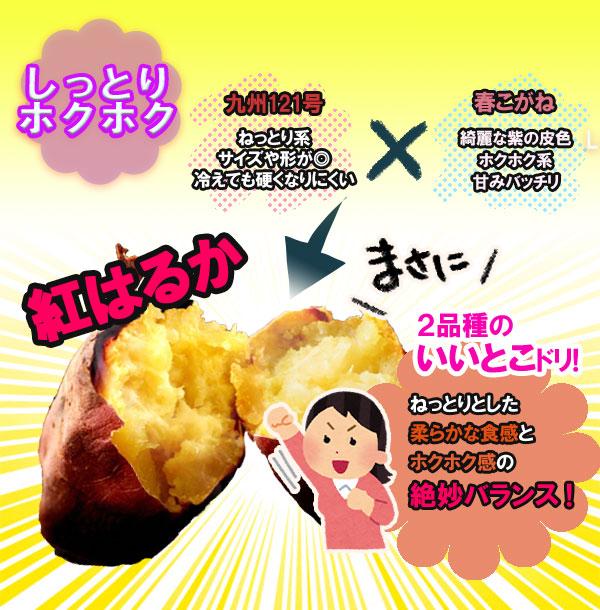 【送料無料】茨城県産 さつまいも 紅はるか 30kg【特Aクラス さつまいも MLサイズ 2020 秋 新芋 土付き お買い得】べにはるか 焼き芋 やきいも 焼芋 サツマイモ さつま芋 プレゼント ギフト 贈答 甘い 人気品種 送料無料