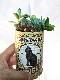 多肉寄植 丸トール缶B (缶直径6.5cm/高さ約15cm)【表土=固化培土、底穴無しゼオライト入リ・送料無料】