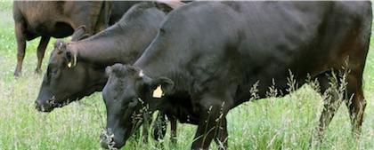 お得甲州牛カレー  220gx2袋