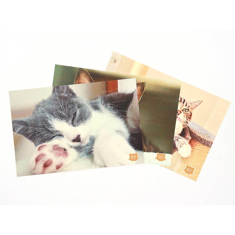 うちの猫でつくる! 日めくりカレンダー(万年/アルバムフレーム付き) 裏面ポストカードタイプ