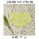 【izumiBODYLABO】単品ショーツ(ライム/ブルー/ネイビー/ラベンダー/アイボリー/グレー/ブラック/ベージュ)