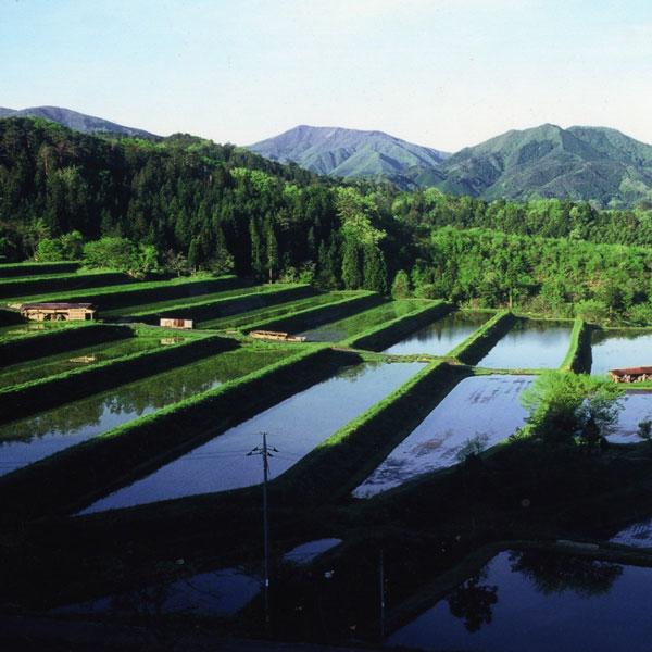 E-2 新米 ご予約 9月下旬出荷予定 令和三年産 出雲國 仁多米コシヒカリ 堆肥施用米 5kg 送料無料