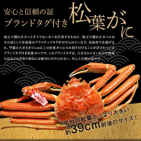 鳥取県賀露港産 浜ゆで松葉がに 大(約800g) 11月10日以降の発送