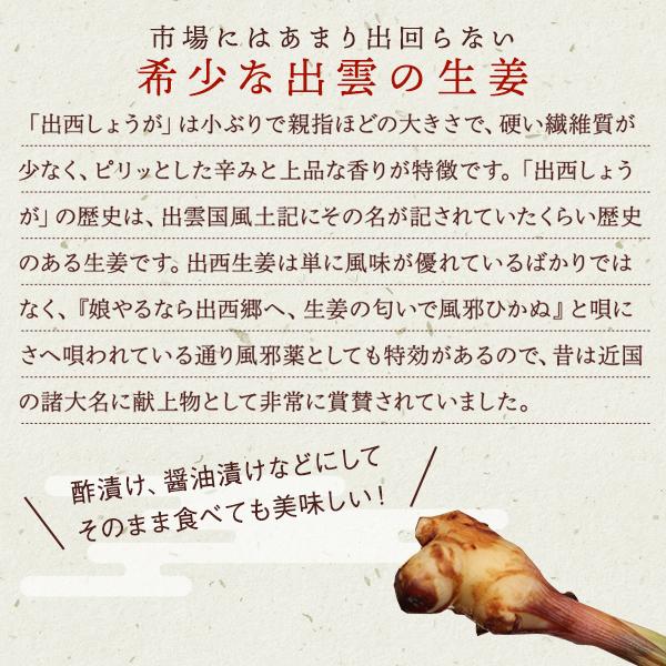 出西しょうが(しゅっさいしょうが) 1kg【9月14日までの販売】