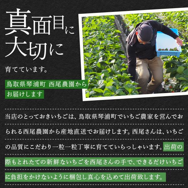 鳥取県オリジナルいちご「とっておき」 ご自宅用 大 4P入り(1P目安7〜10粒入り)