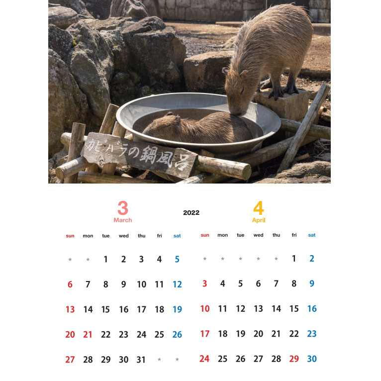 【カピバラ】 伊豆シャボテン動物公園 × 写真家 渡辺克仁 2022 オリジナルカレンダー & ポストカード(公園編)