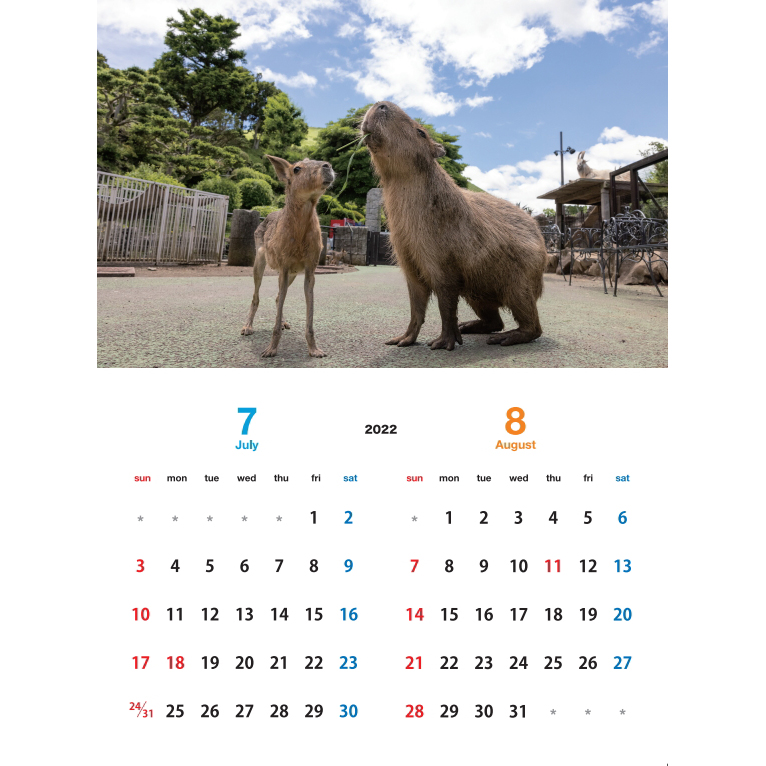 【カピバラ】 伊豆シャボテン動物公園 × 写真家 渡辺克仁 2022 オリジナルカレンダー & ポストカード(野生編)