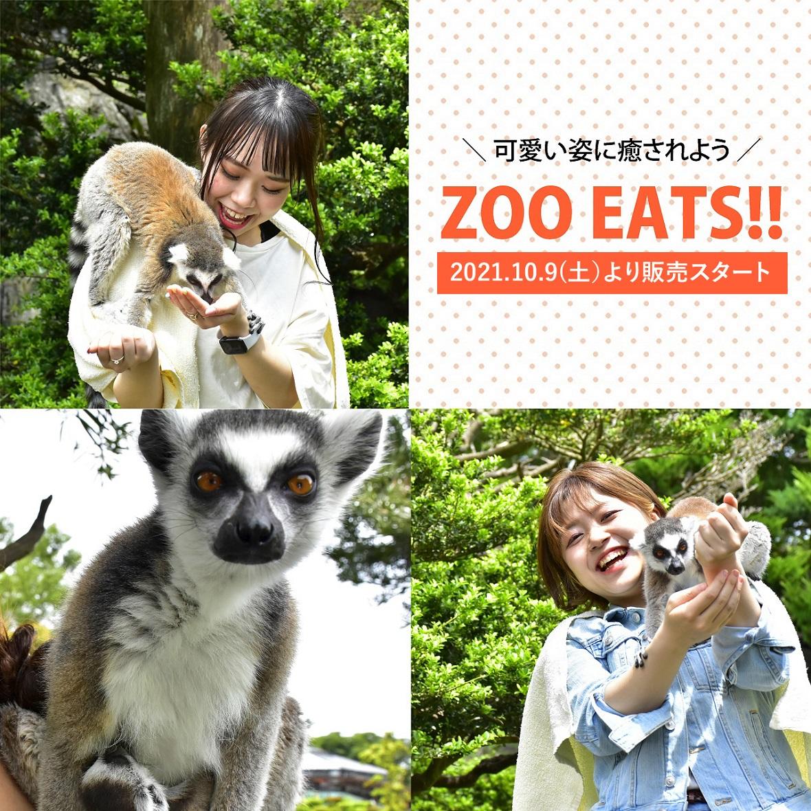 【先着50名様】 Youtube生配信で園内にいるワオキツネザルにおやつをあげよう!オンラインおやつあげ体験 ZOO EATS