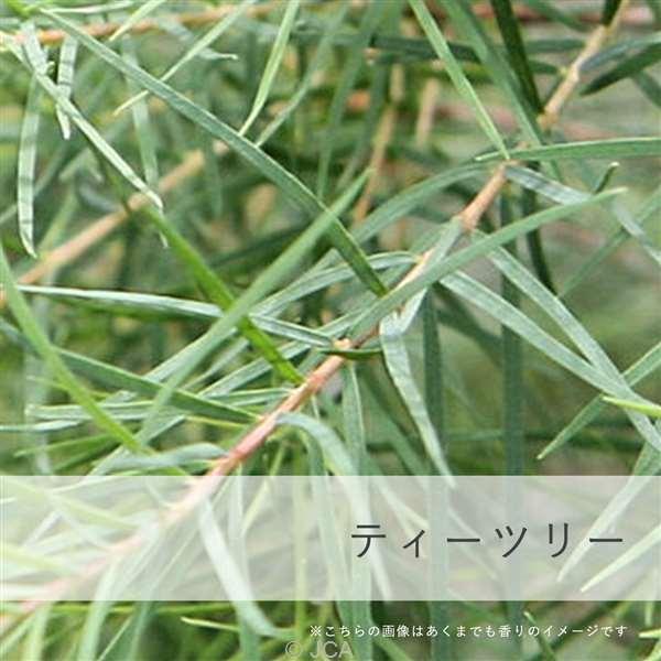 香料 ティーツリー 日本製 50ml/100ml