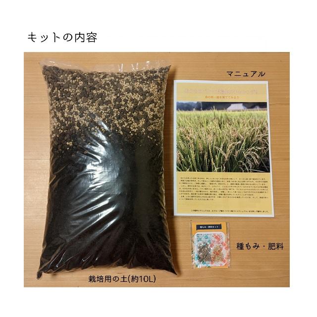 稲作体験キット