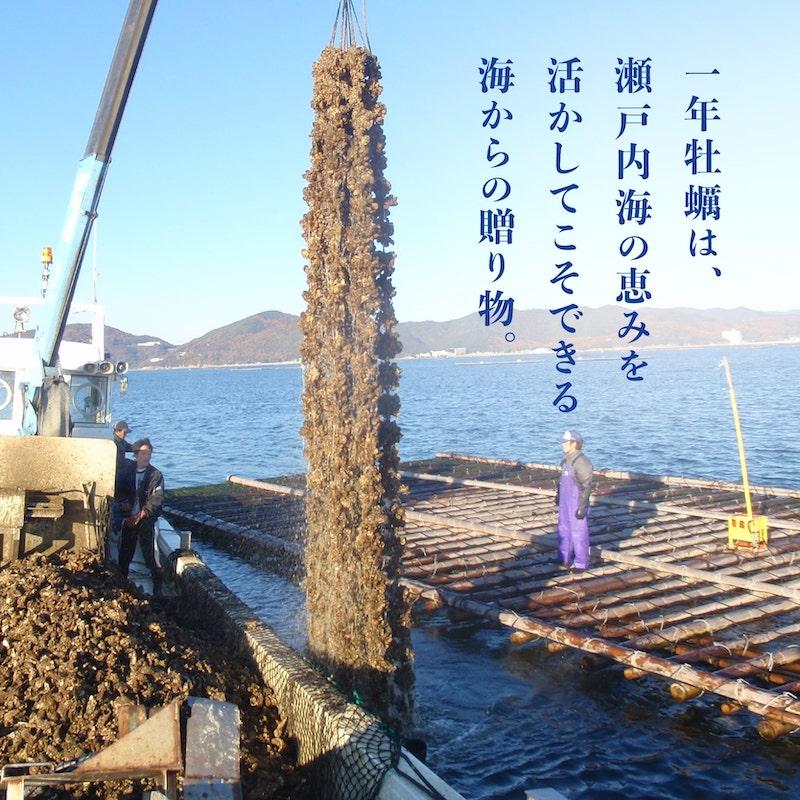 一年牡蠣は瀬戸内海の恵み