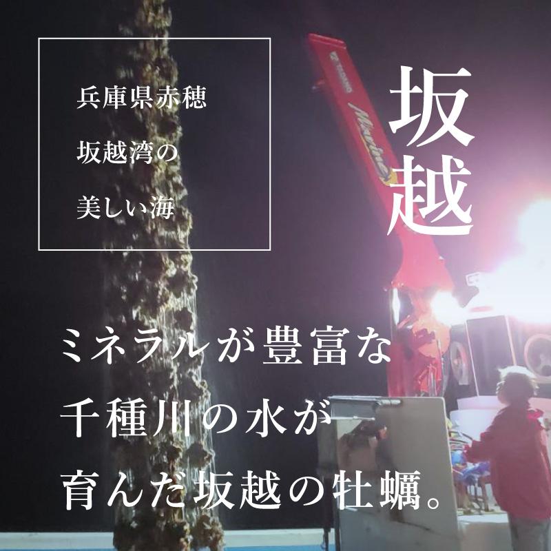 """《兵庫県坂越産》真牡蠣 播磨灘の""""一年牡蠣""""6個より承ります"""
