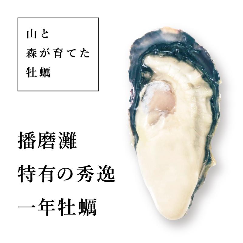 """《兵庫県相生産》真牡蠣 播磨灘の""""一年牡蠣""""6個より承ります"""