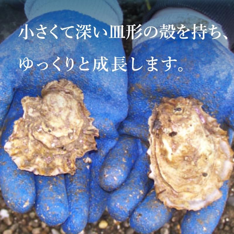 アメリカ ワシントン州3産地(ピュアブルー・クマモト・シゴク)食べ比べセット