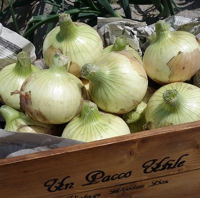 淡路島フルーツ玉ねぎ5kg