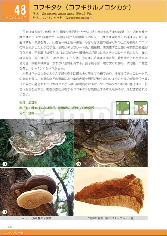 緑化樹木腐朽病害ハンドブック —木材腐朽菌の見分け方とその診断—