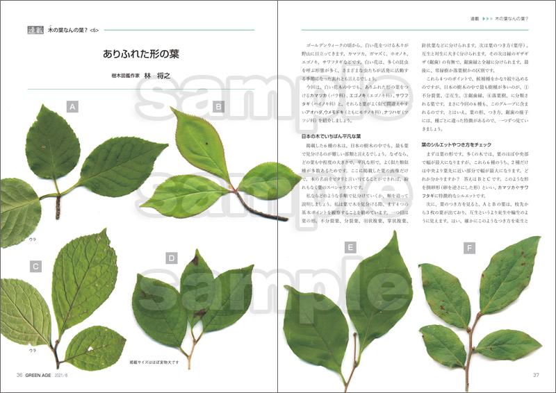 グリーン・エージ2021年6月号(感染症に対応する緑地の活用を考える)【6月15日発売】