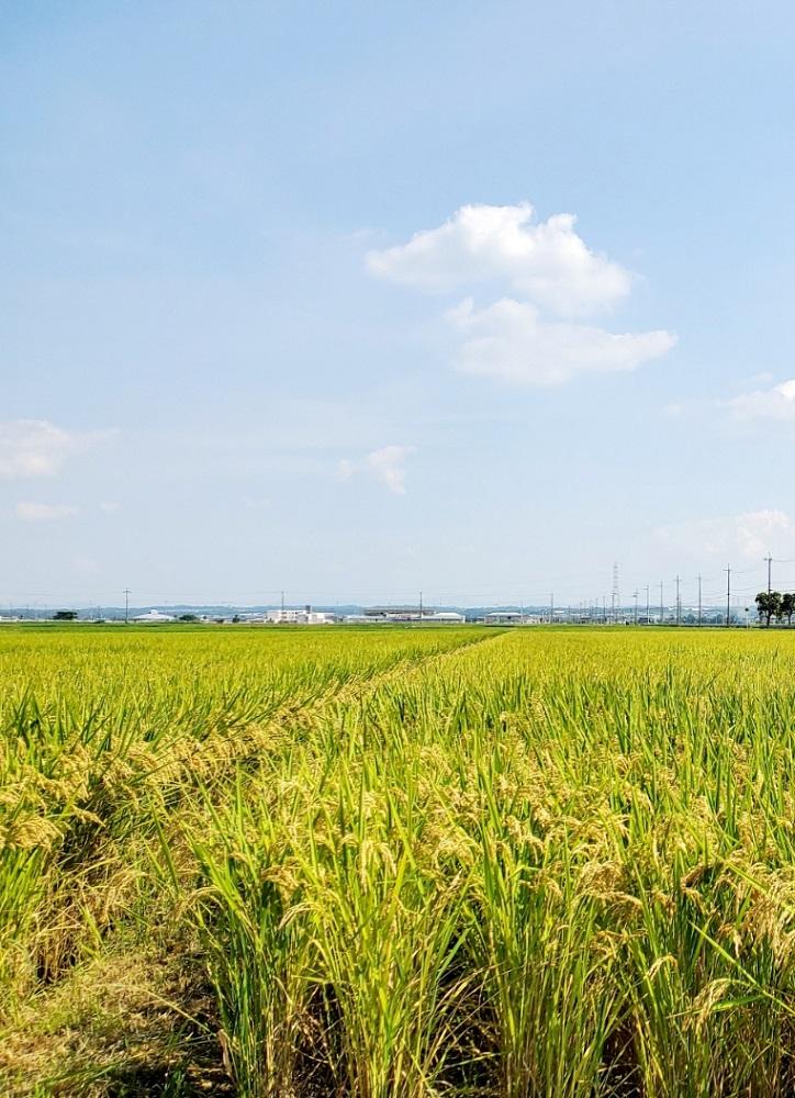 新米予約2021年産 環境こだわり 日本晴 10kg