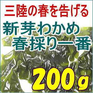 春一番採り「新芽わかめ」(碁石浜産)