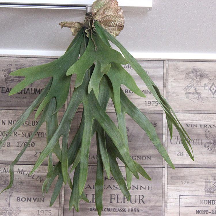 【いなざうるす屋】フェイクグリーン コウモリラン L 【いなざうるす グリーン 緑 フェイク ガーランド アーティフィシャルグリーン 壁掛け 観葉植物