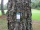 松枯れ病 マツノザイセンチュウ 対策 マツガード 60ml×10本 殺センチュウ 樹幹注入剤 効果6年間持続 ミルベメクチン マツノマダラカミキリ対策