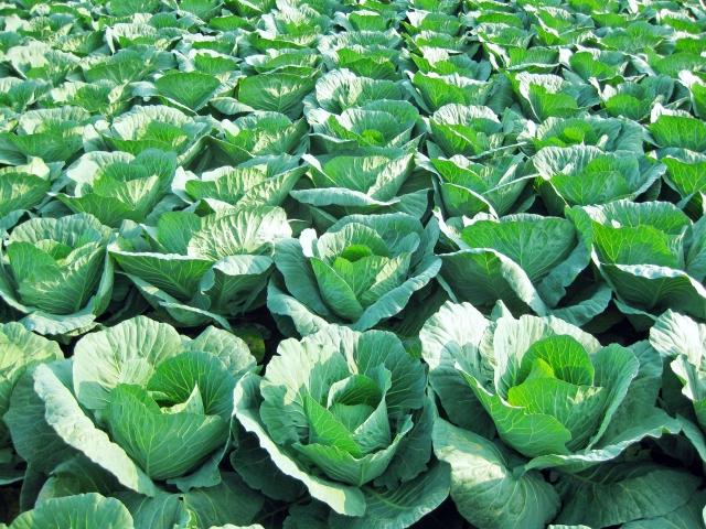 ナメクジ駆除用 殺虫剤 マイキラーL 500ml×3本 農薬 メタアルデヒド水和剤 普通物