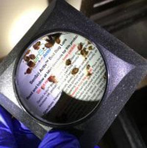 トコジラミ誘引調査トラップ 本体+誘引剤セット×12捕獲 駆除 南京虫 対策 捕獲器