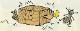 油性木材防蟻防腐剤 防虫 防カビ スーパーシロアリ退治 オレンジ 4L ケミプロ化成