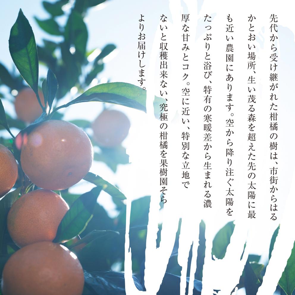 みかん 愛媛産/極上小玉2.5kg 【ご予約11/10〜順次発送】