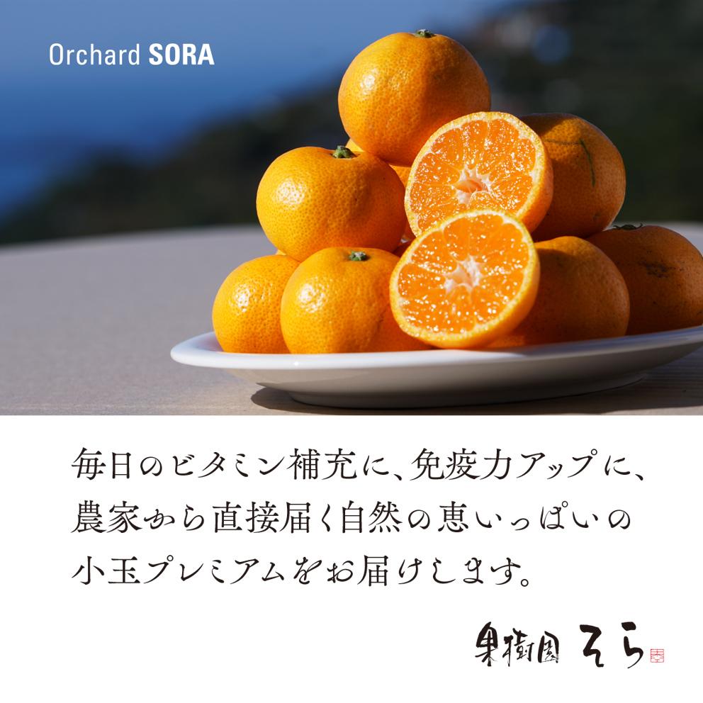 みかん【農家直送/極上小玉】2.5kg 送料無料
