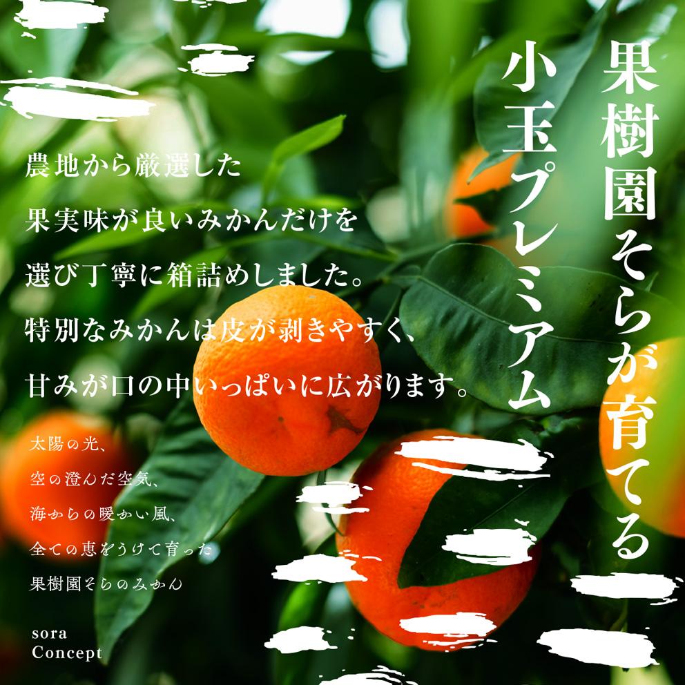 みかん【農家直送/極上小玉】5kg 送料無料