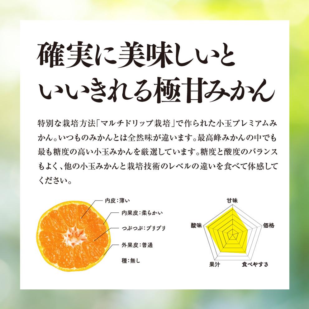 みかん 愛媛産/訳あり小玉10kg 【ご予約11/10〜順次発送】
