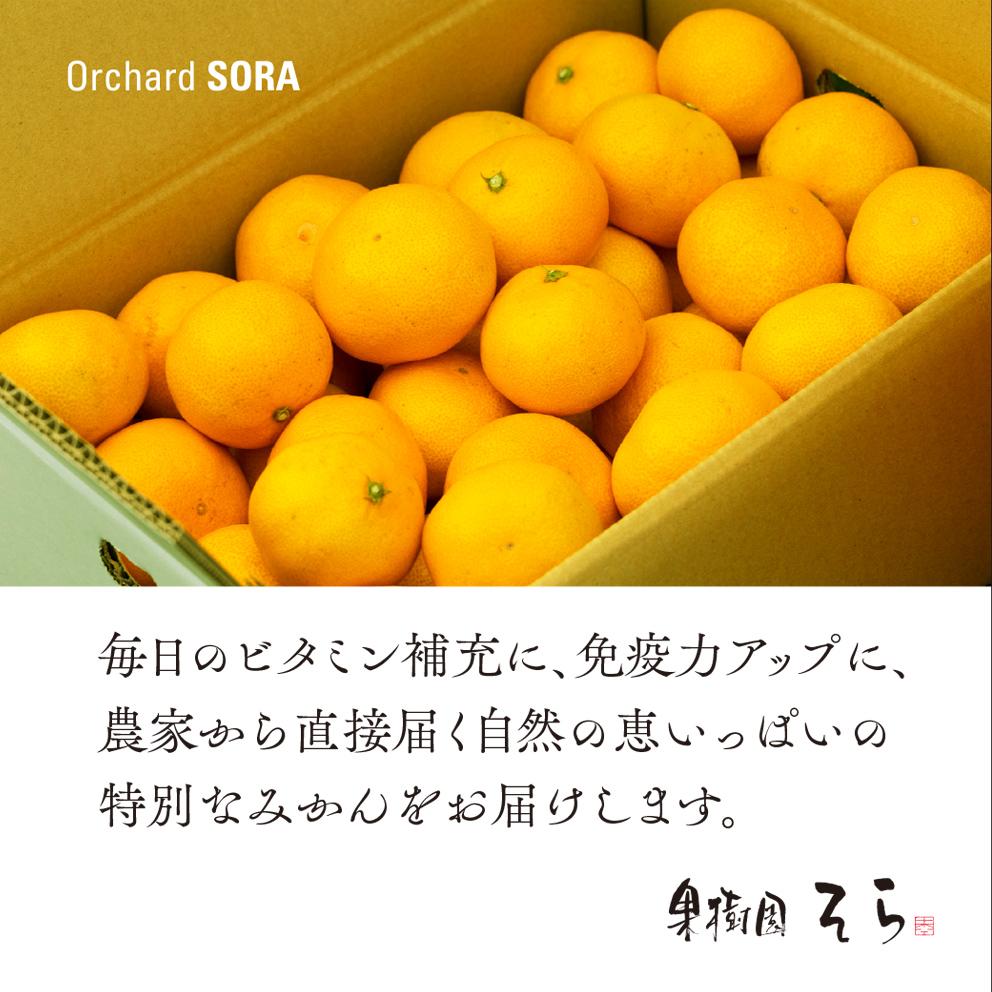 みかん【農家直送】5kg 送料無料