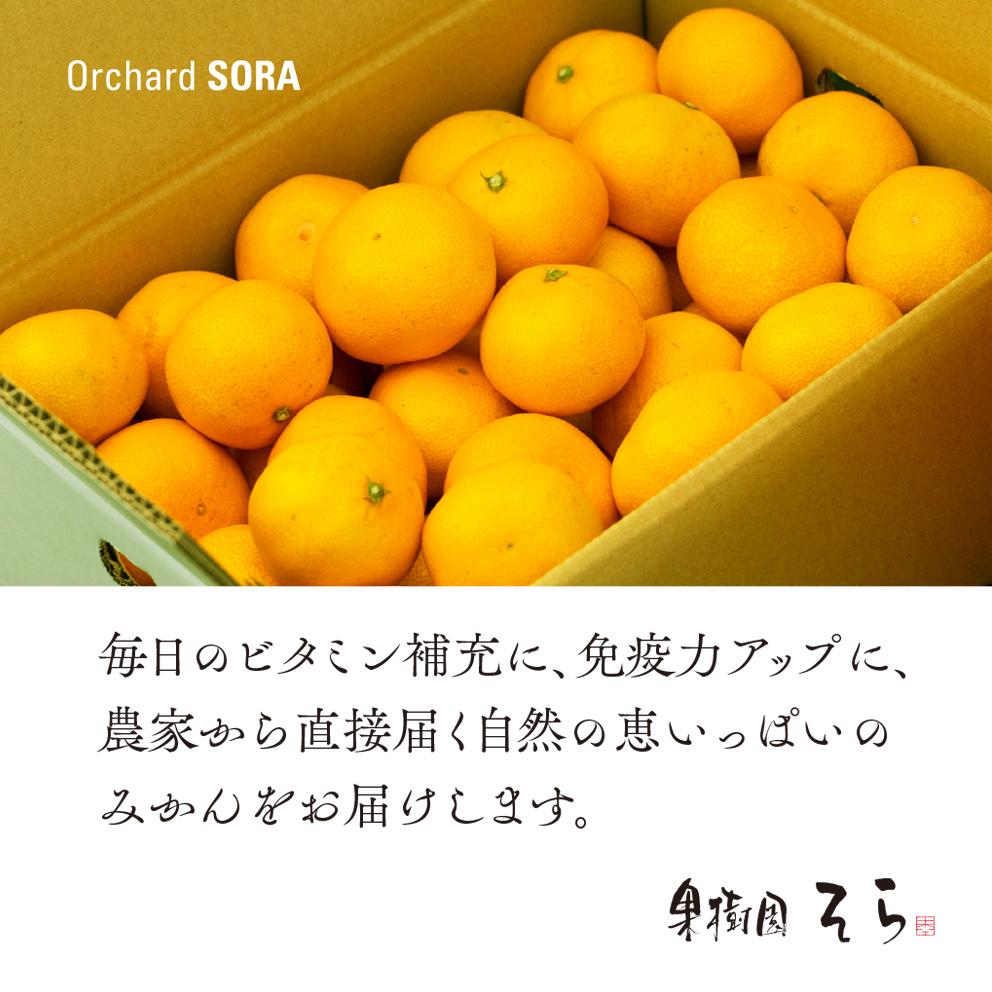 みかん【農家直送/訳あり】5kg 送料無料