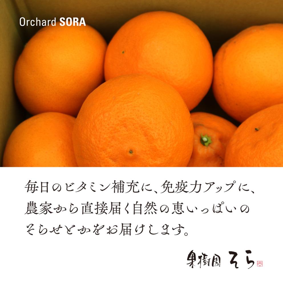 そらせとか 愛媛産みかん/大人の贅沢3kg 【ご予約2022/2/20〜順次発送】